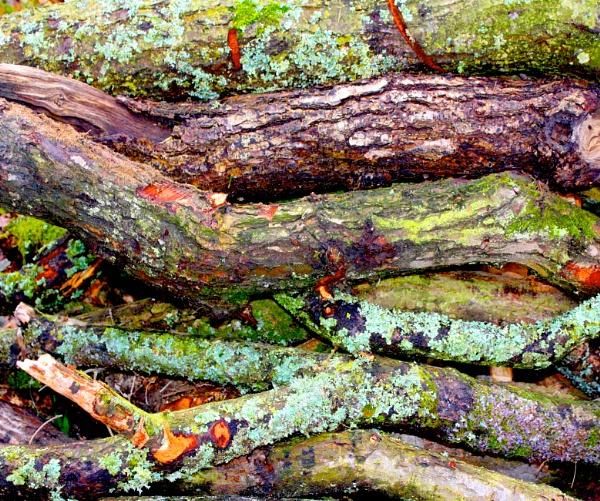 Lichen by ddolfelin