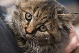 Rachel's Kitten