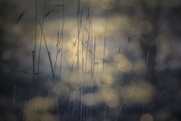 winter sun by gerainte1