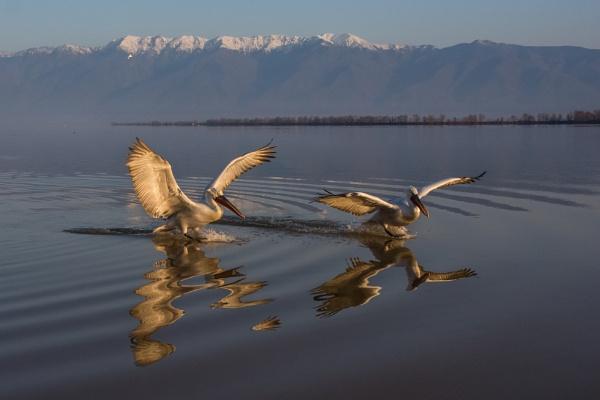Sunrise landing by Photoseeker