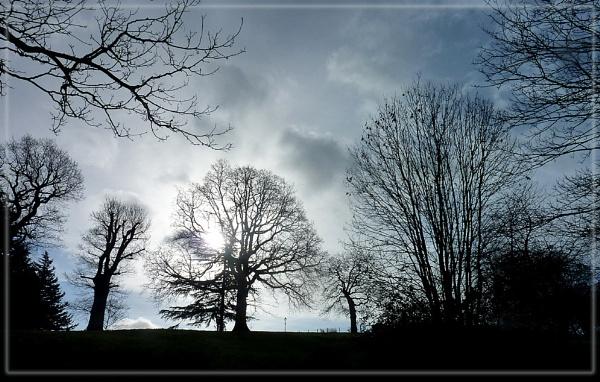 silhouettes at Alexandra Palace park by CarolG