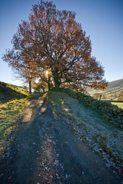 Autumn in Farndale by oll1e