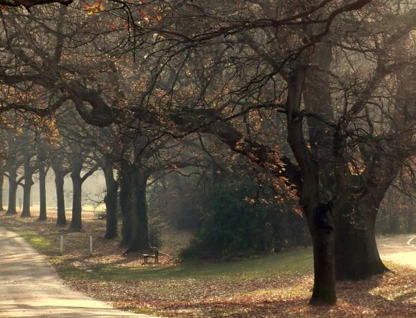 Golden Leaves Everywhere