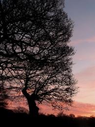Sky in Morning Shephards Warning