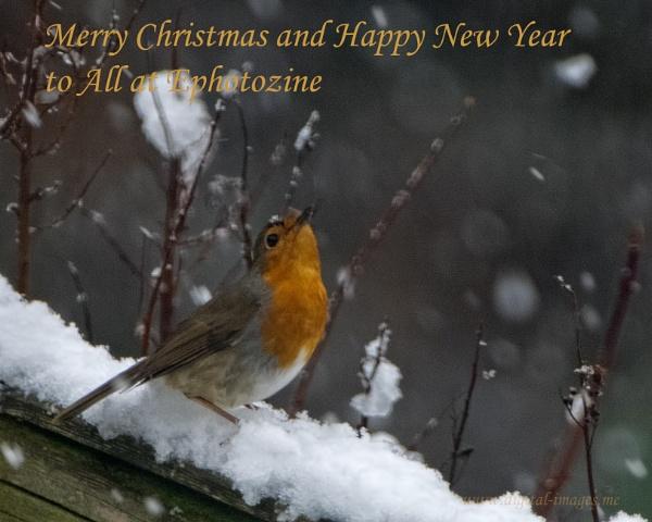 Merry Christmas by Alan_Baseley