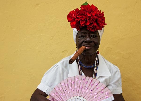 Havana Cigar by stevie
