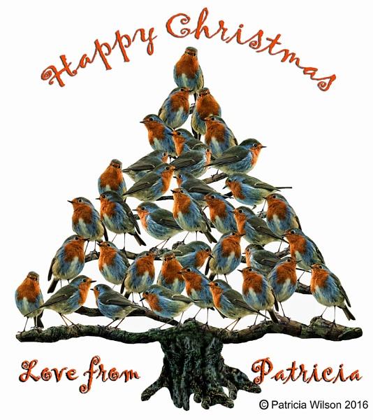 robin tree by PatriciaWilson