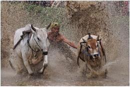 bull race 2016#1