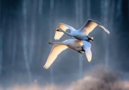 Morning flight together