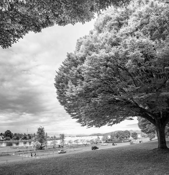 Big Tree by tommyegan