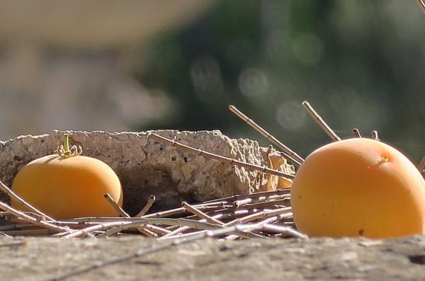 Fallen Fruits by Silverzone