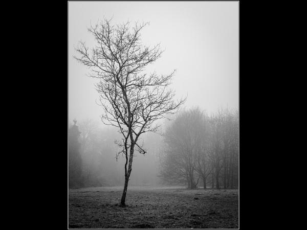 Tree in a Mist by Otinkyad