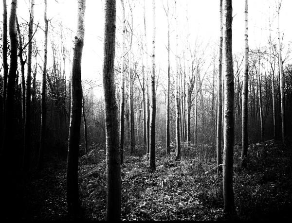 Gothic trunks by dawnstorr