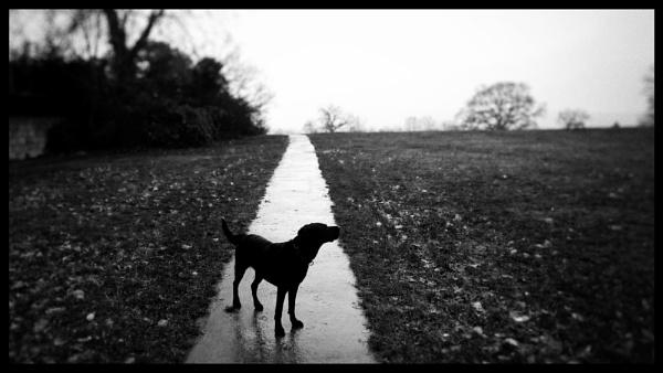 A mild, wet Christmas walk by notsuigeneris