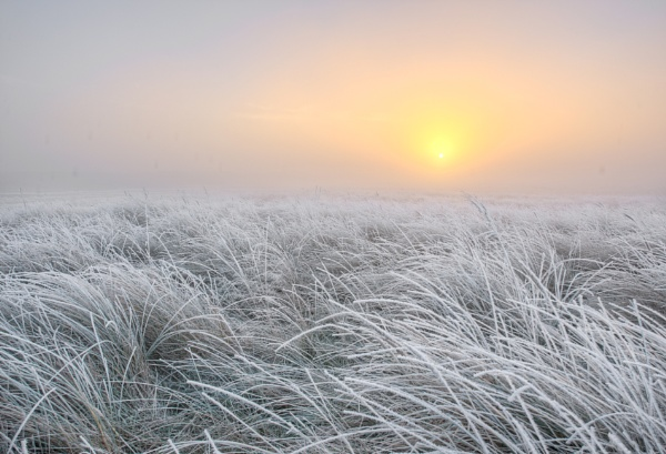Sunrise Fog and Frost by carper123