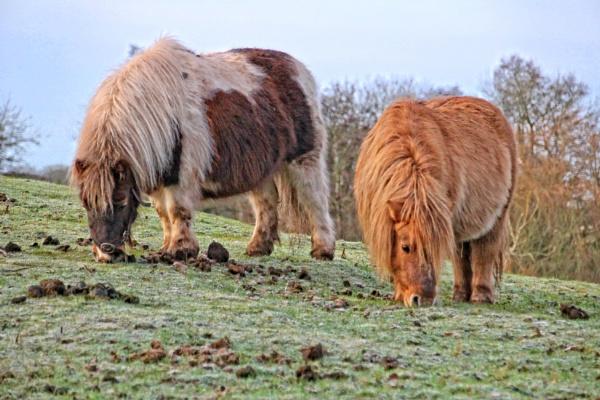 ponies by pks