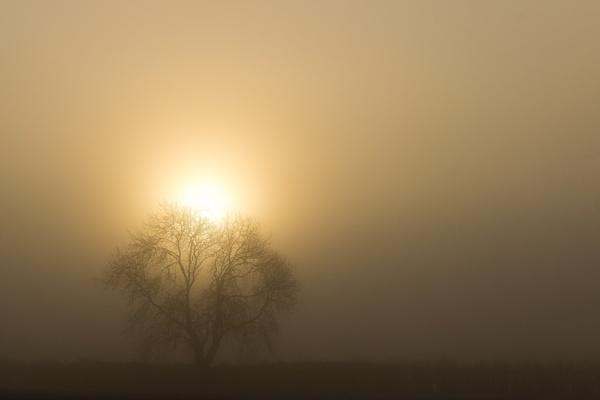 foggy sunrise by DCox