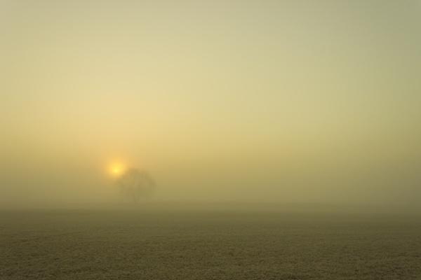 foggy start by DCox