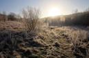 Winter Morning by rickhanson