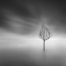 Dreams by Diggeo