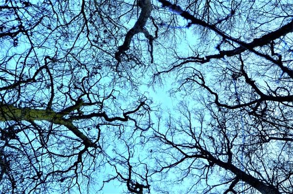 Fraxinus & Quercus by cdnikon