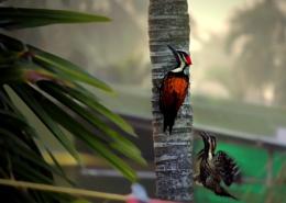 Woodpecker @ Own Style