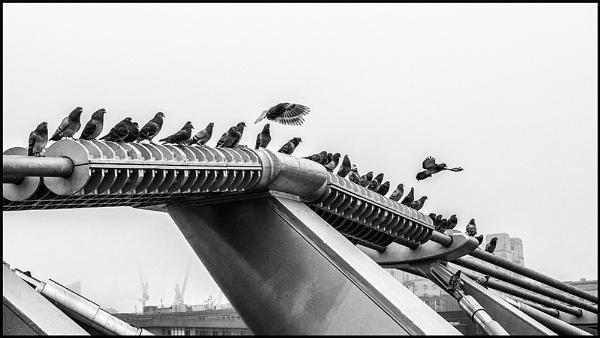 Birds of a Feather by dwilkin