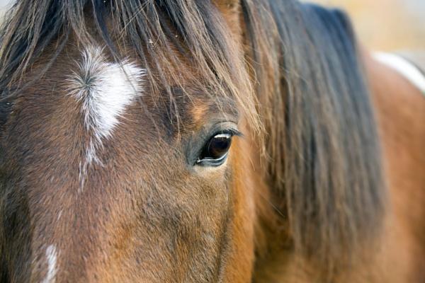 Spirit by horse2009