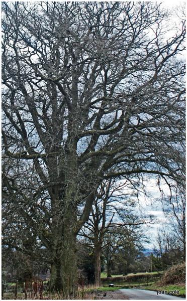 WINTER TREE by EMJAYCEE