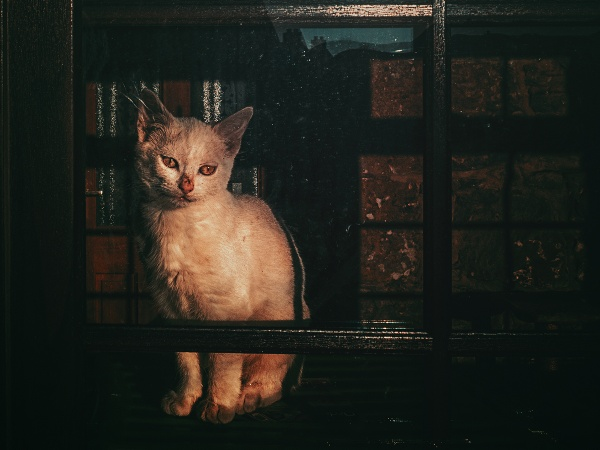 cat in a window by meyeview