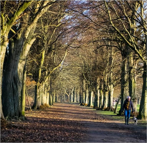 Walk in the park (Tyne Green Hexham) by derekp