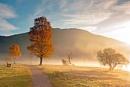 Autumn Mist by stevie