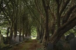 Churchyard Trees