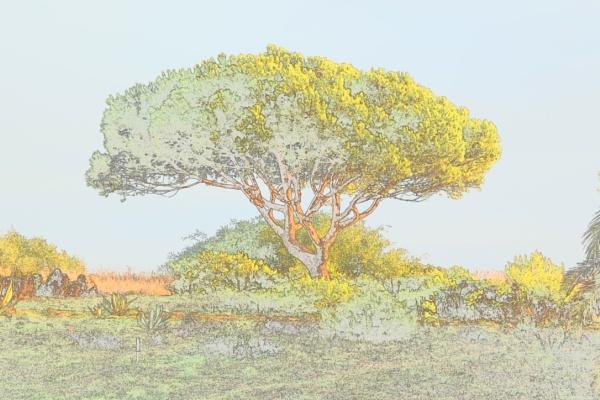 Negative Tree by voyger1010