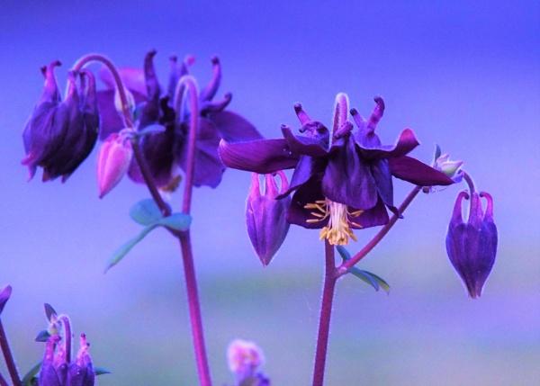 Purple Haze by cptdaniel