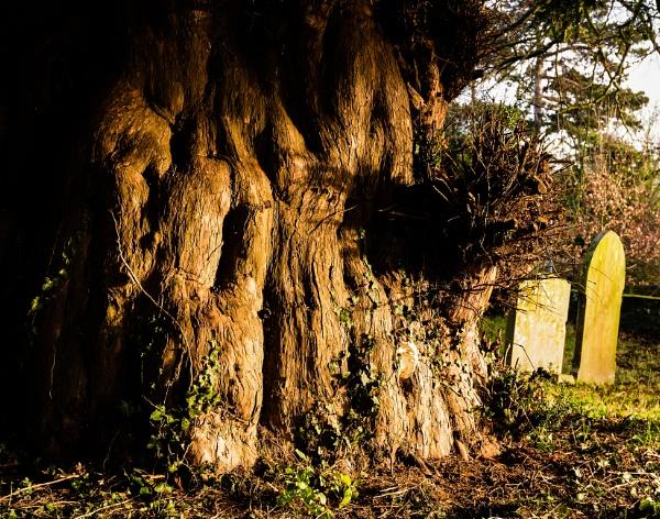 Next to the Yew Tree by Nikonuser1