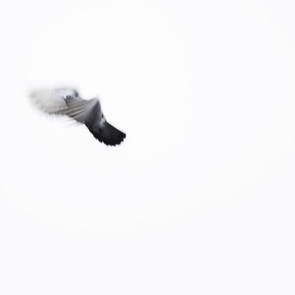 Bird I by CVG167