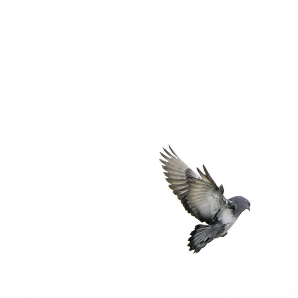 Bird III by CVG167