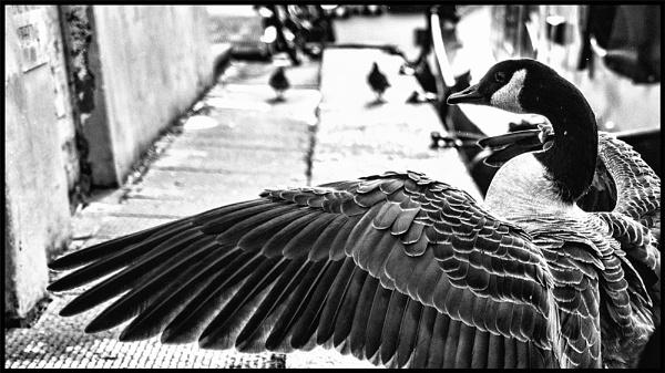 Feathers by dwilkin