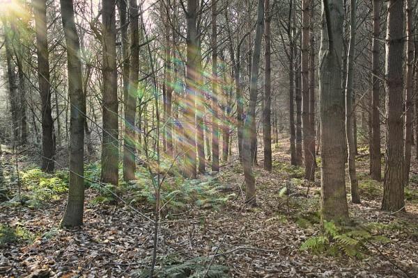 Rainbow Wood by Doglet