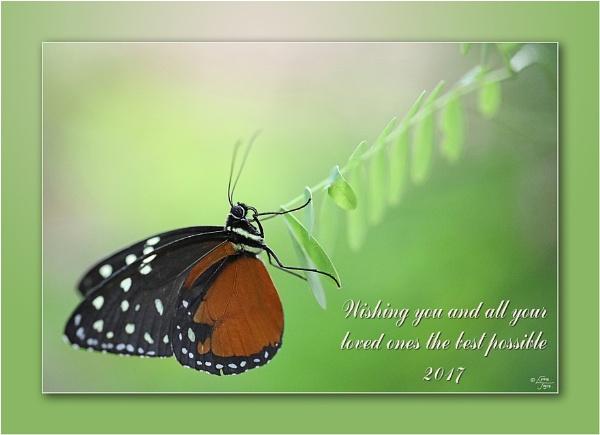 New Year Butterflies by LynneJoyce