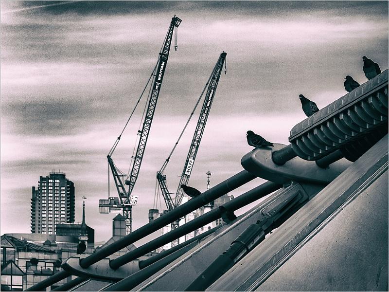 Cranes and Pigeons