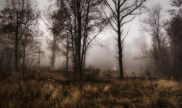 The woodman\'s fire by dawnstorr