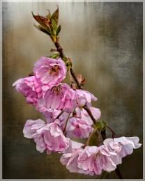Spring Blosom