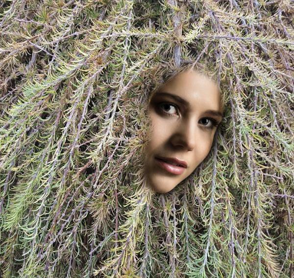 In the Hedge by Bickeringbush