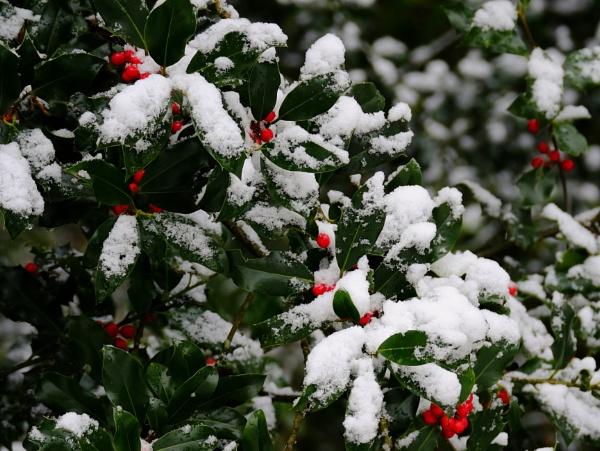 Snow Green by Houba