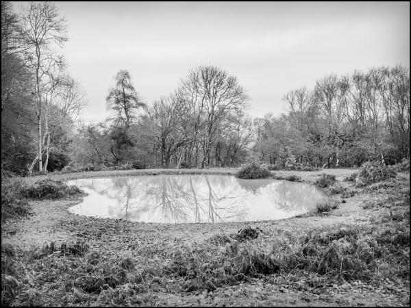 Quantock Pool by bwlchmawr