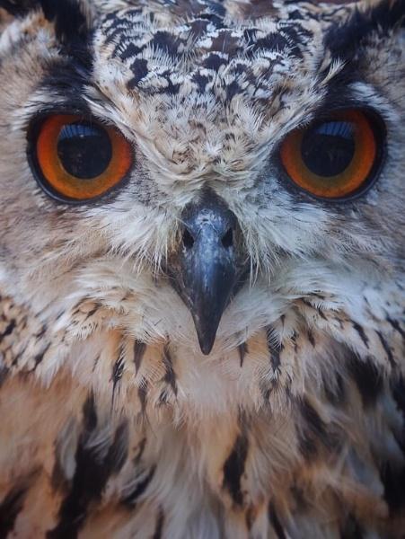 Owl by victorburnside