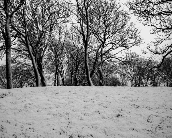 Winter Trees by victorburnside