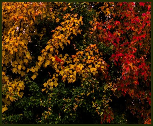 autumnal study by estonian